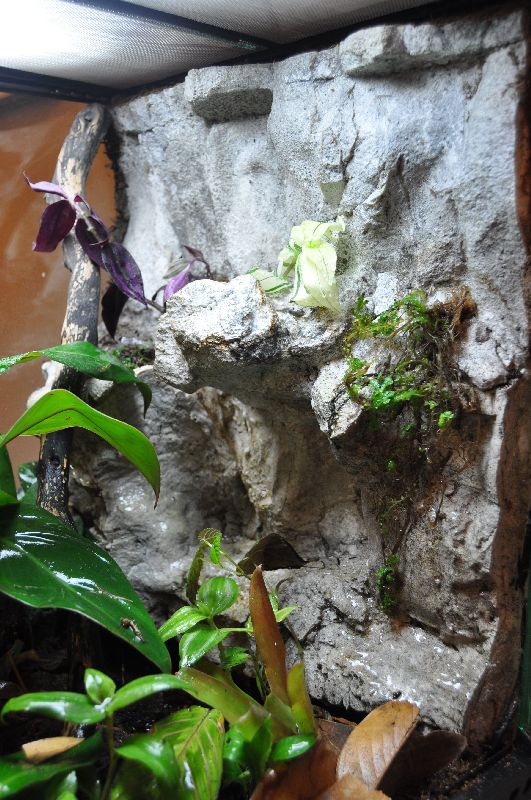 Exo Terra Dripper Plant Drip Watering System: Just Finished My First Viv... Exo Terra 18x18x24
